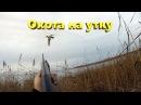 Охота на утку из засидки