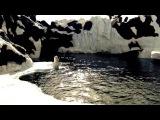 SEA WORLD SAN DIEGO.  POLAR BEAR. WALRUSES. BEIUGA. SNOW HILL. CALIFORNIA.