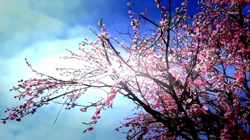 Aly Fila - Key Of Life [ Music Video ]