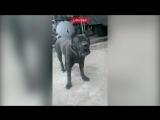 Боевой пёс батальона Спарта научился лаять на слово укроп