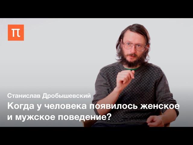 Половой диморфизм у приматов и древних людей Станислав Дробышевский
