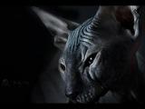 Тайны кошек. Кошка представитель иного разума