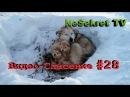 Спасаем Собак От Голодной Смерти. Спасение Животных В Улан-Удэ, Россия
