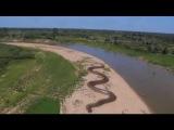 Giant Anaconda - Worlds longest snake found in Amazon River
