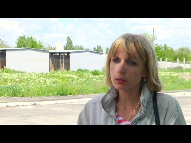 У Миколаєві зграя бездомних собак ледь не розірвала літню жінку