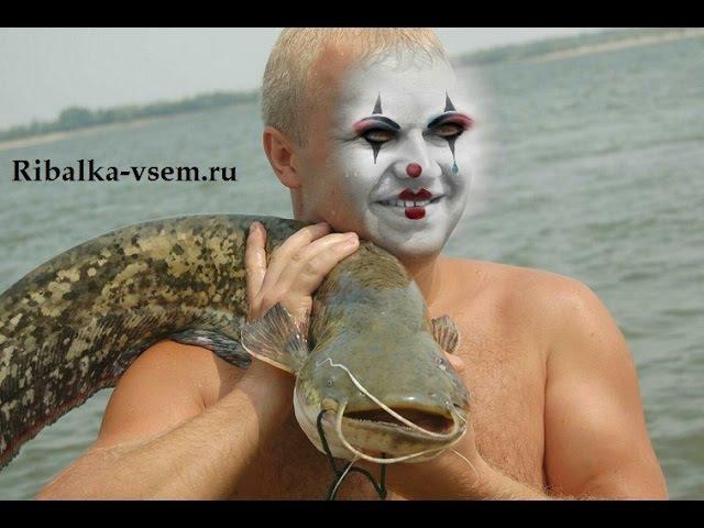 Небольшой сом около 5 кг Рыбалка в августе На необычный квок som na kvok