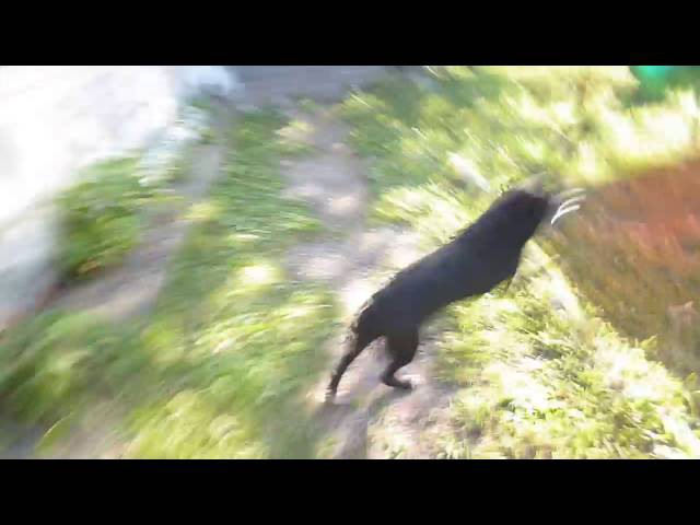 Собака бесяка