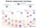 Чудо иммунной системы человека