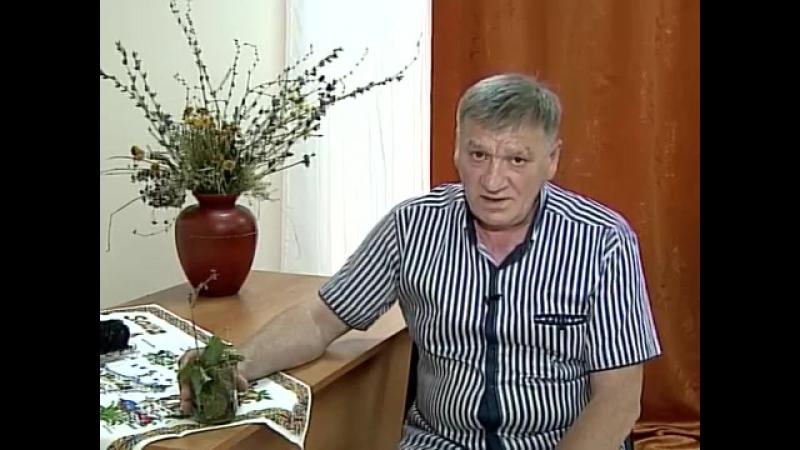 Борис Михайлович про грушанку круглолистную и её полезные свойства