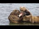 Рыбалка. Медведи на рыбалке