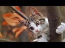 Смешные кошки Часть 87 оооченнь длинная
