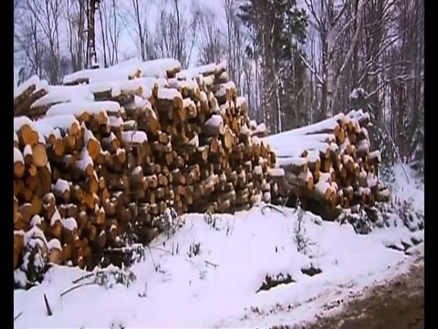 Американские лесорубы 2 сезон 12 серия