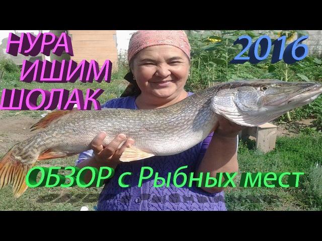 Обзор с Рыбных мест №3 Шолак ИШИМ НУРА