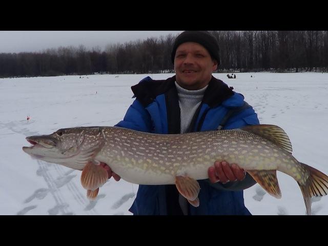 Рыбалка! Самая огромная щука 8 кг. На Волжском затоне!