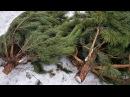 Викриті правопорушення щодо винищення лісових насаджень