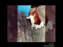 Индийские бультерьеры VS питбули - подборка (собачьи бои)