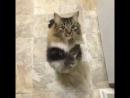кот-попрошайка