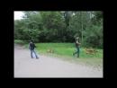Прогулка с собаками в парке