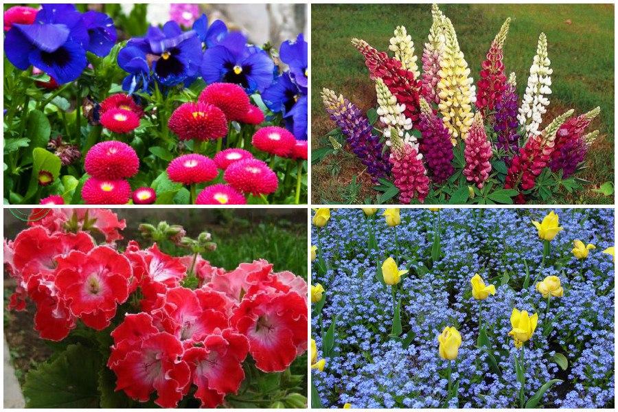 Полезная информация о цветах