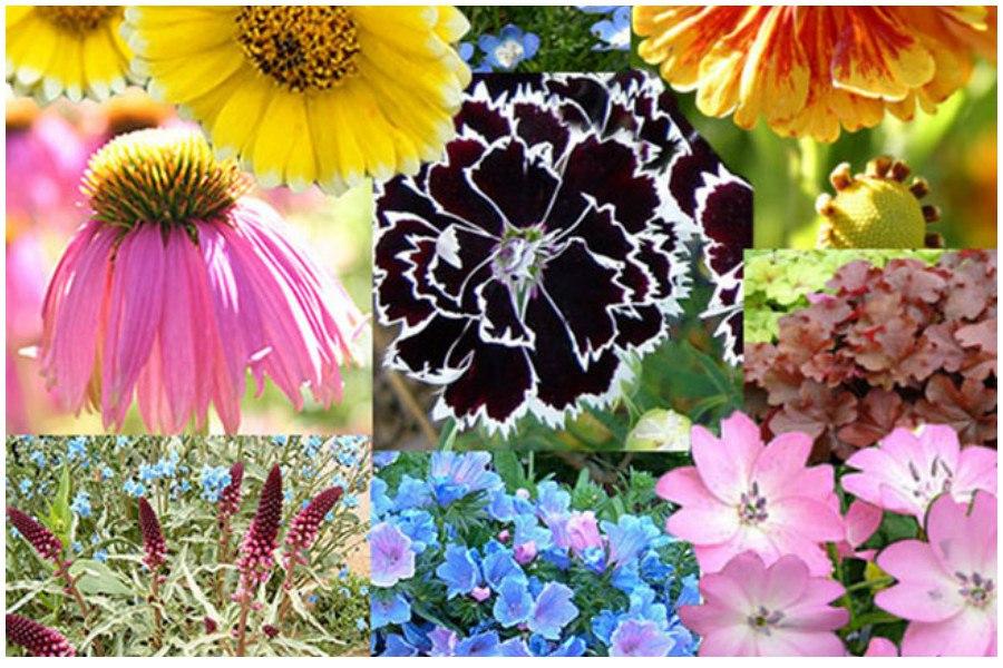 Сроки посадки цветов на рассаду таблица