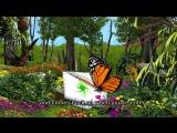sony WE5 ECO Image Video