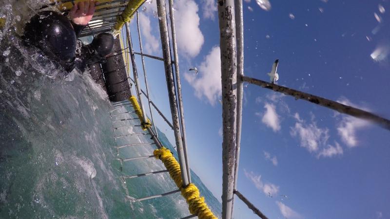 South Africa, Gansbaai Shark Alley vid. 2