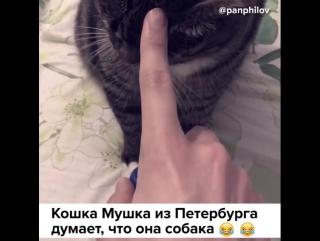 Кошка, думает, что она собака
