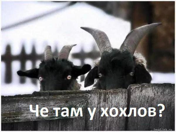 Неизвестные повредили мемориальную доску Вацлаву Гавелу в Киеве - Цензор.НЕТ 6527