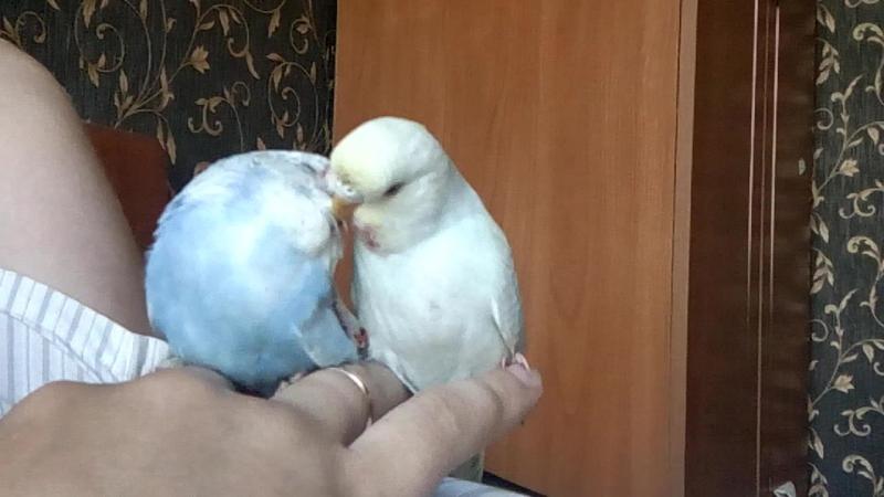 Скай и Луи,первая встреча