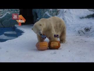 Медведь и тигр выбирают президента США
