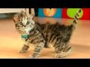 Мультик про котят Маленький МИЛЫЙ КОТЕНОК Мой любимый кот Видео Игра как мульт д...