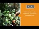Ахименес и жара как помочь растениям пережить жару