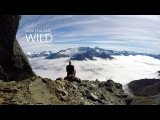 David Walden  New Zealand Wild