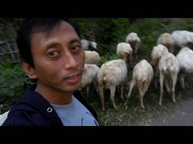 PARE KEDIRI Cak Handoko Ludruk ternak Domba