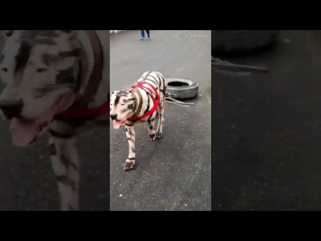 Bully kutta training in China