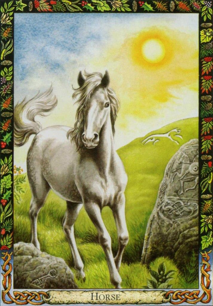 Лошадь PCvlhx6jw84