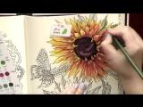 Colouring Summer Nights of Hanna Karlzon. Sunflowers _Раскраска-антистресс