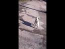 Лютер на прогулке