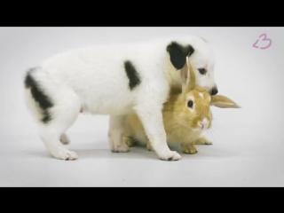 Щенки впервые видят коати, курицу, хорька, морскую свинку и кроликов