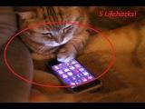 5 лайфхаков с участием кота!