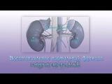 Восстановление нормальной функции надпочечников. Изохронные биения. Normalize Adrenal Function.