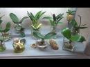 Орхидеи в воде. Гибель,или успешная реанимация? ЭКСПЕРИМЕНТ!НЕ ПОВТОРЯТЬ