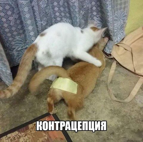 Гав Доктор | Донецк