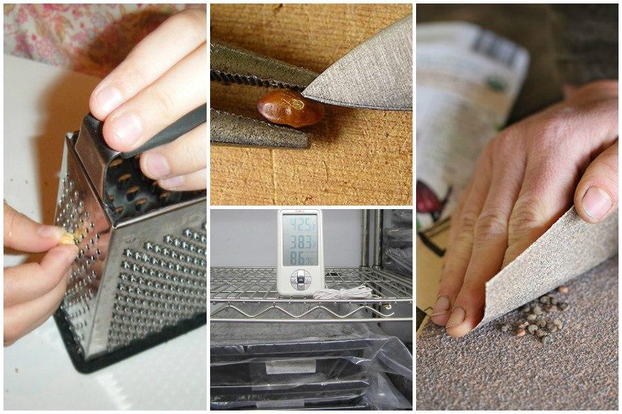 Подготовка семян к посадке-скарификация на терке, нождачкой, ножом, стратификация в холодильнике