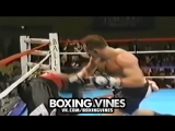BOXERS PUNCHED THROUGH THE ROPES #1 (Boxing Vines)   vk.comboxingvines