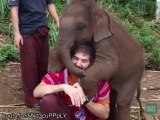 Baby elephants don't make good pets, but you're going to wish they did))I.B