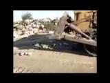 Россельхознадзор отчитался об уничтожении более 11 тысяч тонн санкционной продукции. На видео уничтожение трех гусей