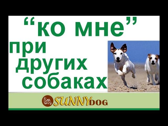 Ко мне при других собаках. как научить собаку подходть к вам по команде