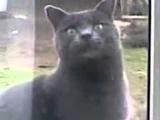 Видео прикол кот говорит саня открой