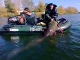 Рыбалка в Чернобыле. Споймали гигантского сома.